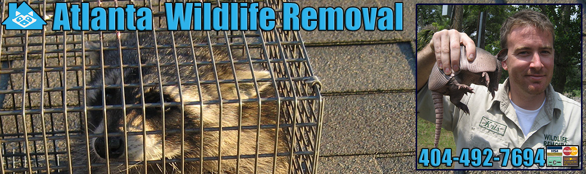 Atlanta Wildlife and Animal Removal